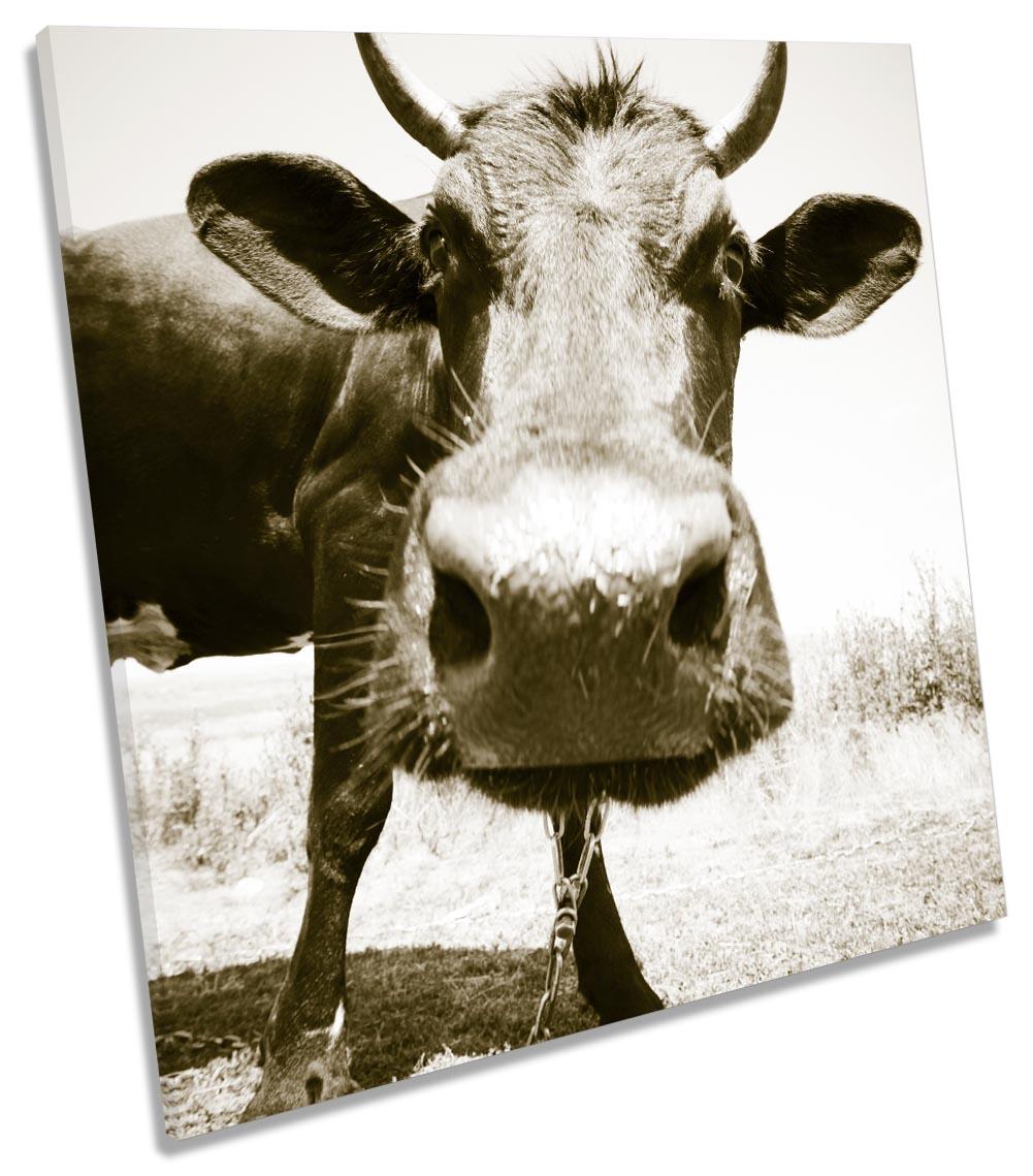 Cow Face Sepia Farm-SG11