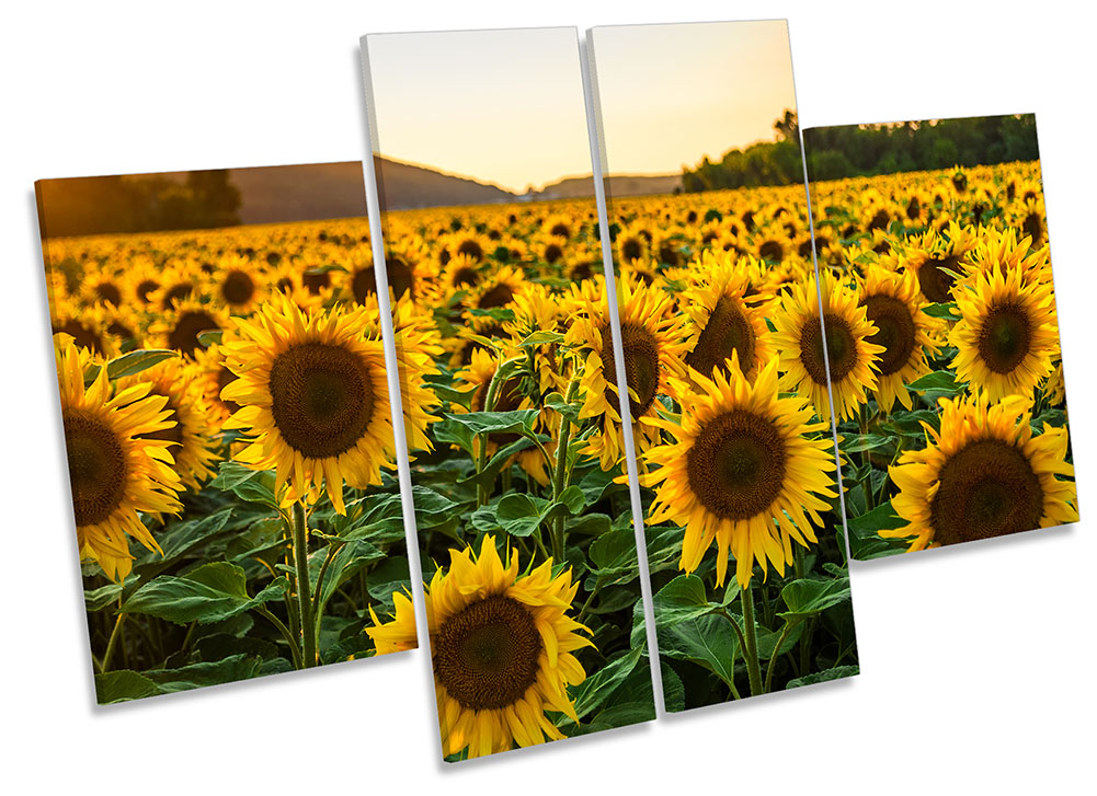 Sunflower Sunset Field Picture Canvas Wall Art Four Panel Ebay