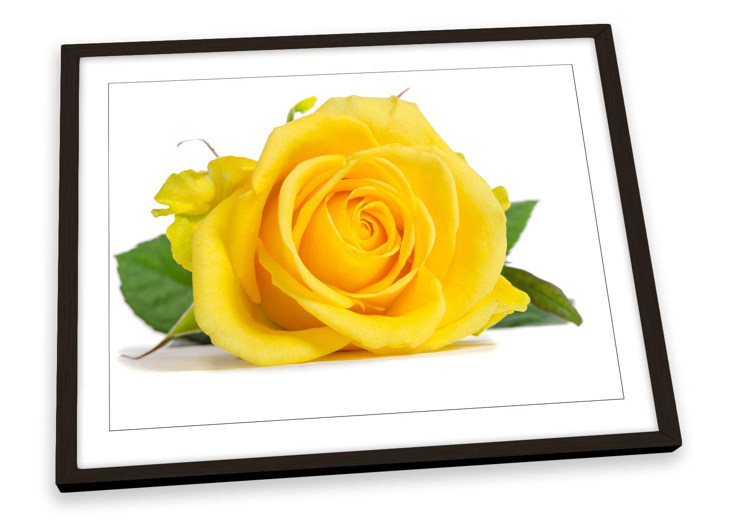 FL018 Orange Rose Floral Canvas Wall Art Framed Flowers Picture Print